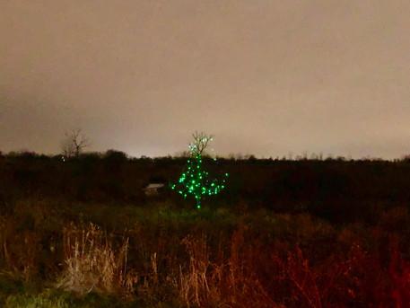 Little Lit Tree on Prairie Path