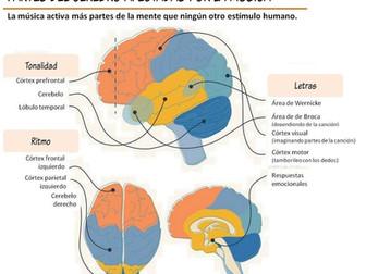 Efectos de la música en el cerebro.
