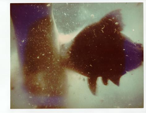 piranha-scene_stills-43.jpg