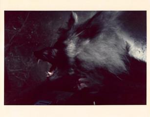 the_howlingscene_stills-color-013.jpg