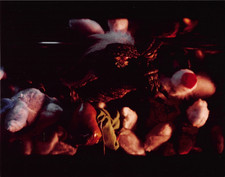 gremlins-scene_stills-color-007.jpg