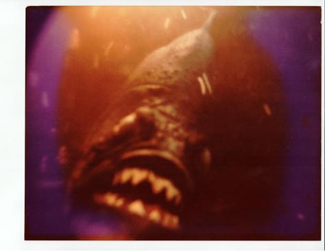 piranha-scene_stills-45.jpg