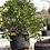 Thumbnail: Fabric Tree Planting Bag