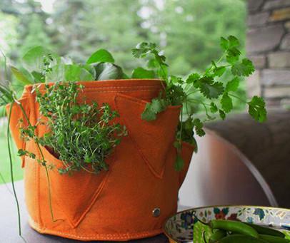 Favorite Basil Herb