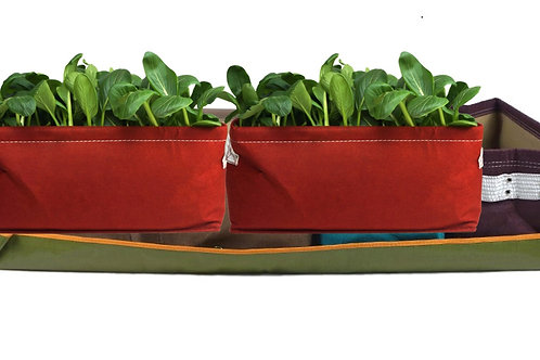 Bloombagz Kid Vegetable Garden Package