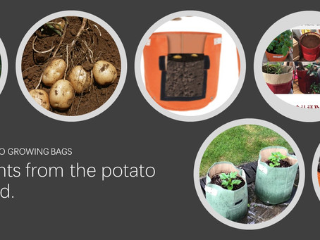 How to Plant Potatoes in Bloombagz?
