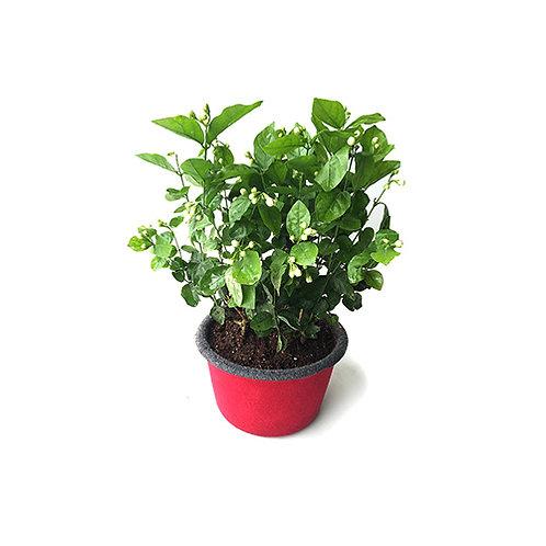 Bloompot (BP-2/BP-3)