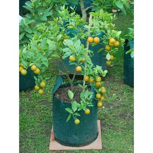 PE Tree Planting Bag