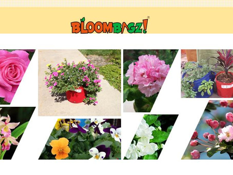 What kind of flowers are suitable for potting in May?