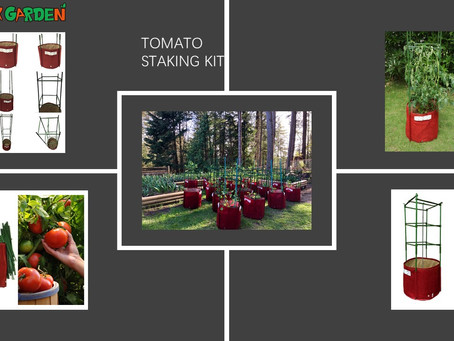 Removable Tomato Staking Kit