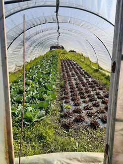 photo légumes.jpg