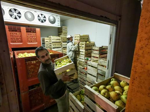 Conservation des fruits dans les chambres froides