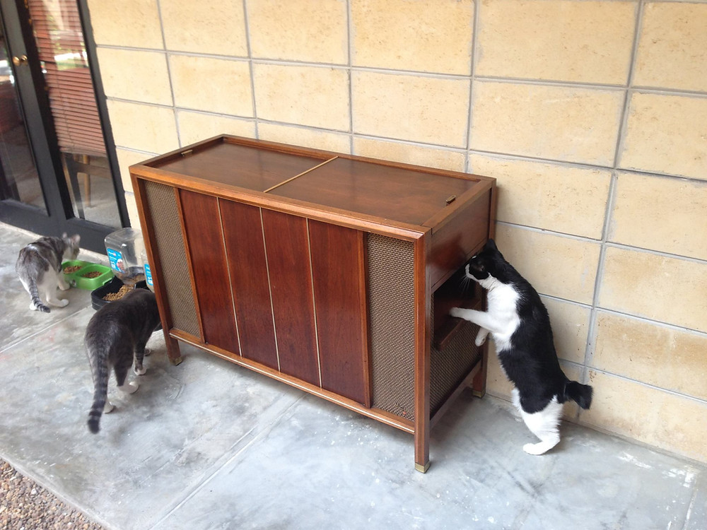 DIY Mid century modern cat litter box