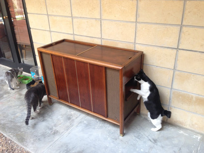 DIY Mid Century Modern...Cat Litter Box?