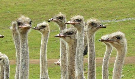 Having Fun at the Ostrich Farm in Curacao