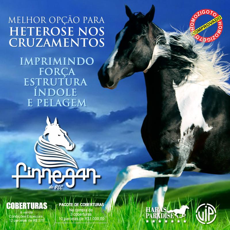 Finnegan - INSTA
