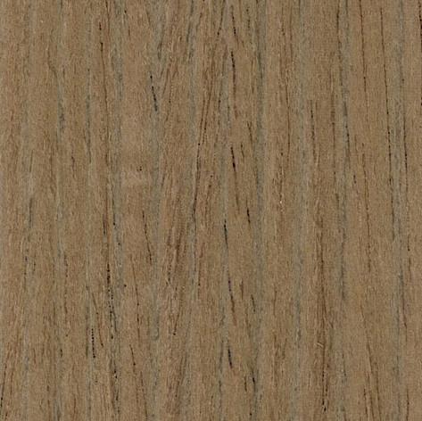 Corsican Oak