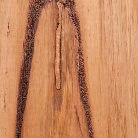 Wormy Chestnut