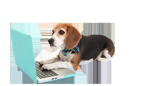 pet-sitter-job-dog-3.png