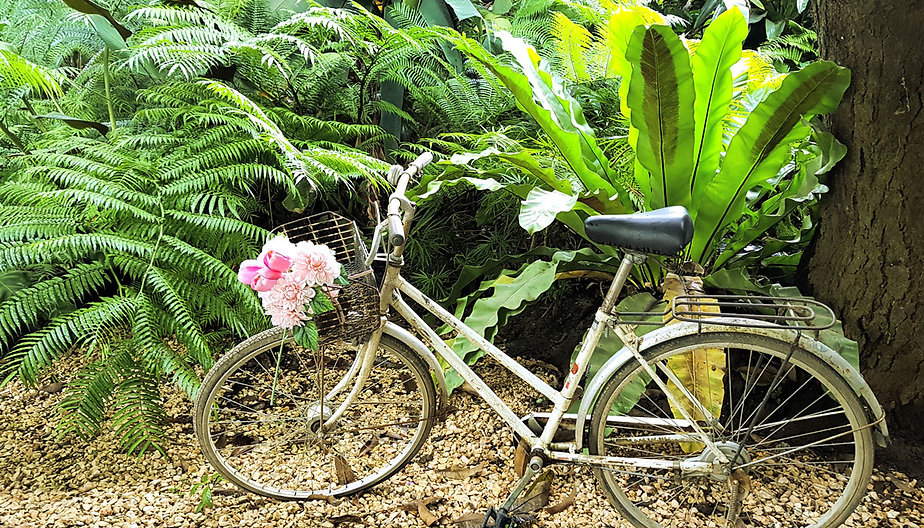 Marisse Patisserie Bicycle