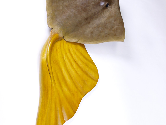 Sting Ray in Basswood No. 1 (2010)
