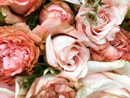 Flora 101: The Rose