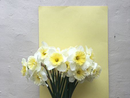Flora 101: The Mighty Narcissi