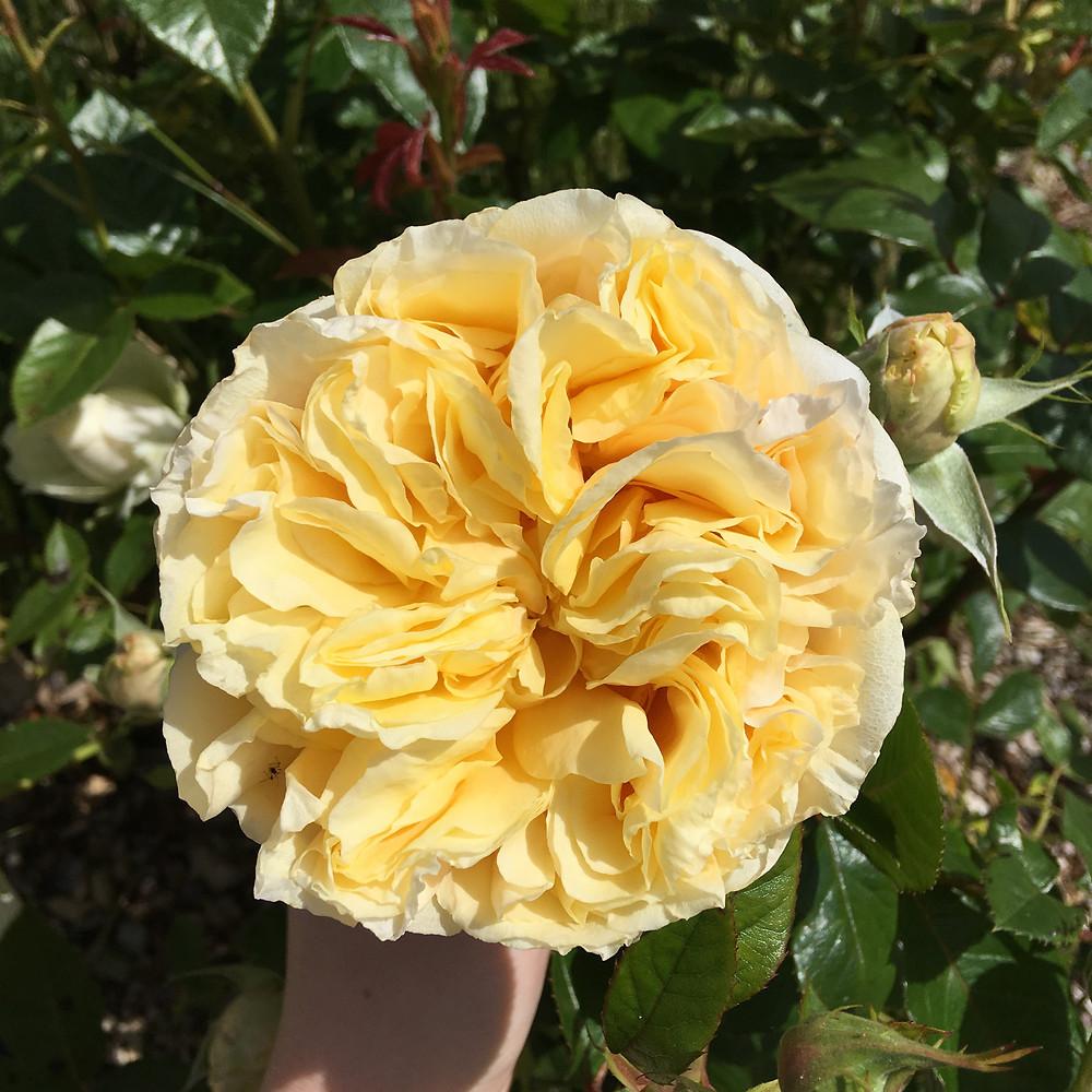 rosa my girl kent wedding florist