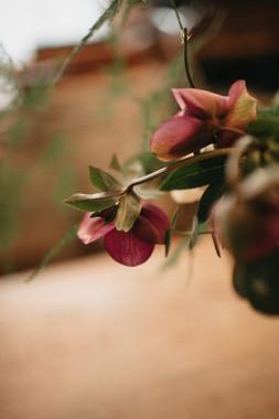 sarah-longworth-photography-5.jpg