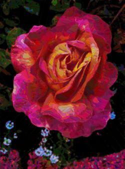 Good rose.jpg