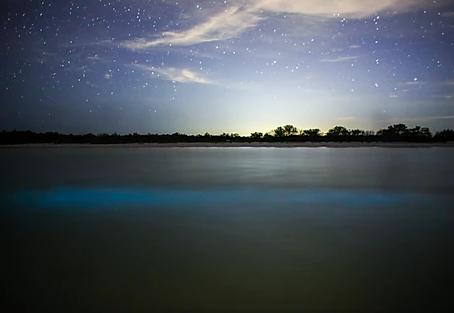 Bioluminiscencia: una experiencia inolvidable en Las Nubes de Holbox