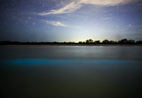 Bioluminescence: an unforgettable experience at Las Nubes de Holbox