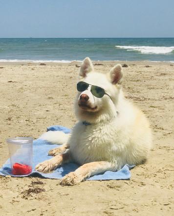 Everyone Loves the Beach!