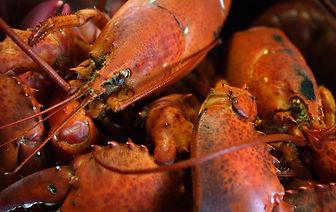depositphotos_4819770-stock-photo-lobster_edited.jpg