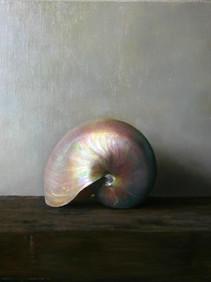 Pearl Nautilus