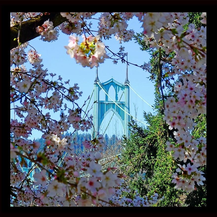 St Johns Spring (3)