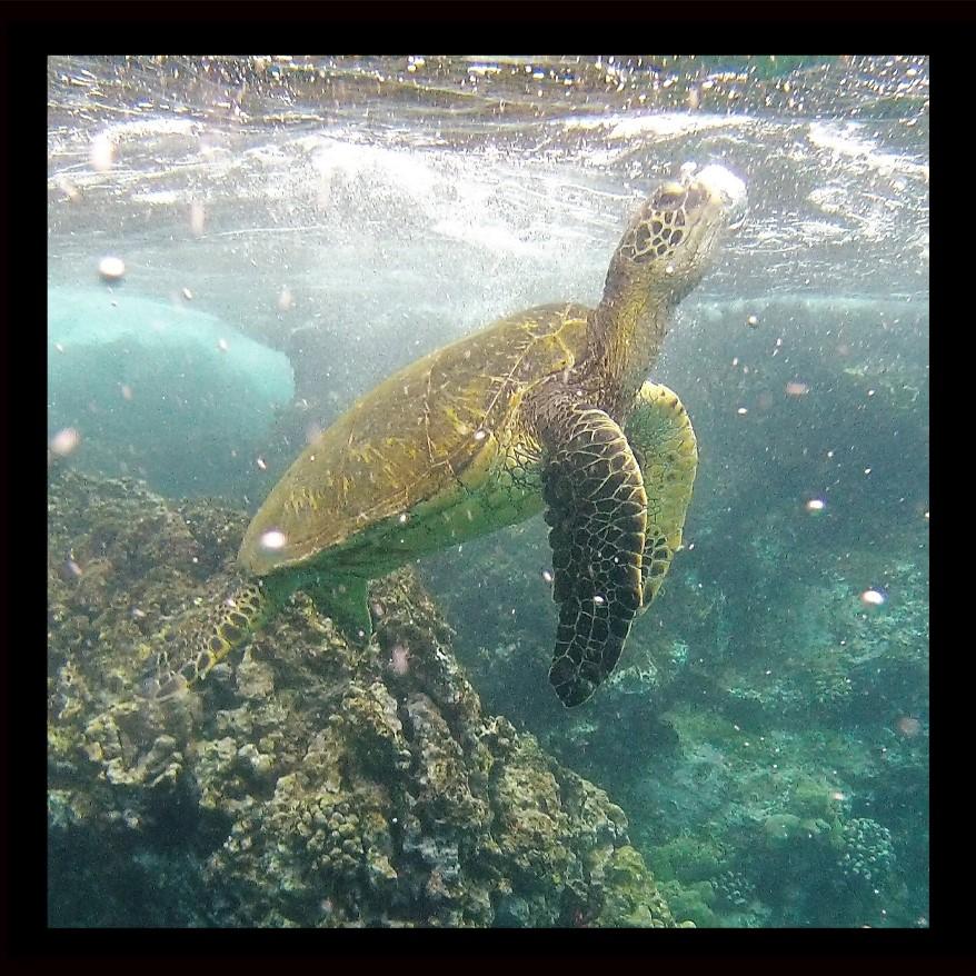Phil's Turtle (2)