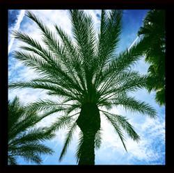 Palm Tree (2)