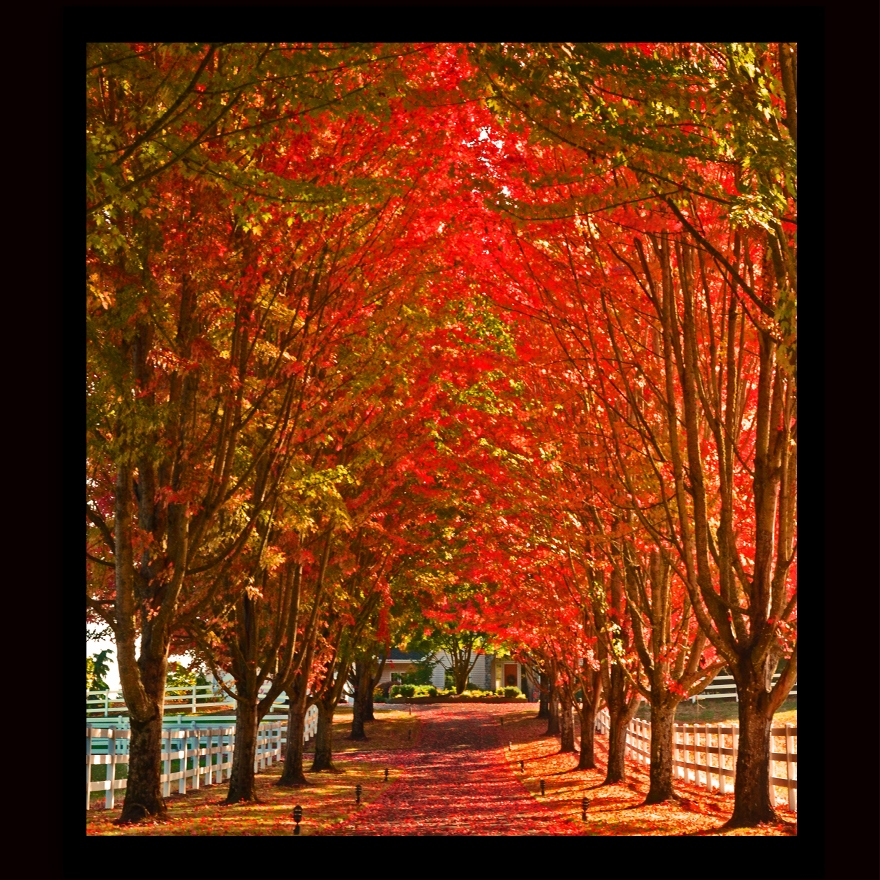 Red Driveway.jpg