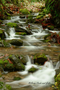 Barlow Trail.jpg