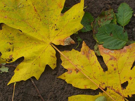 Lodge Leaves