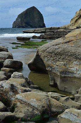 Pacific City Tide Pools