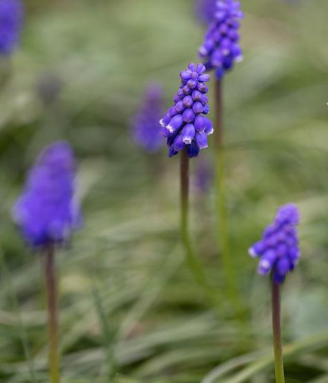 GardenMarch-1256.jpg
