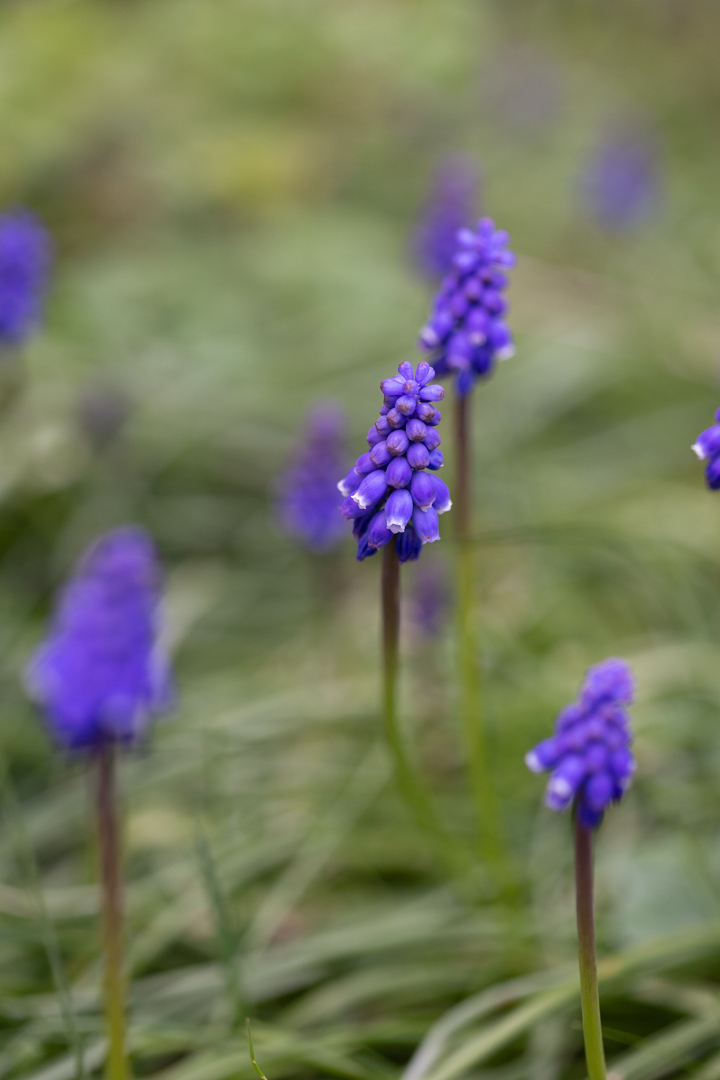 GardenMarch-1256