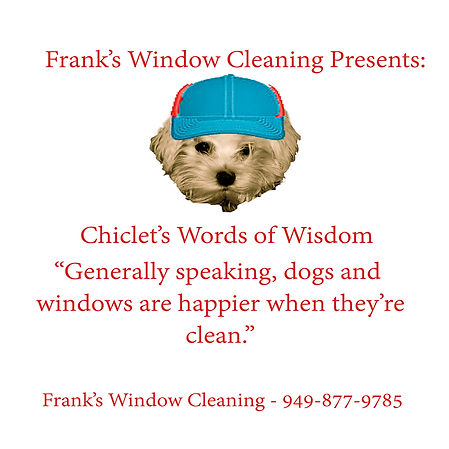 Chiclet knows all about clean windows and dogs. Click on Frank's Window Cleaning in Newport Beach for the view you deserve!
