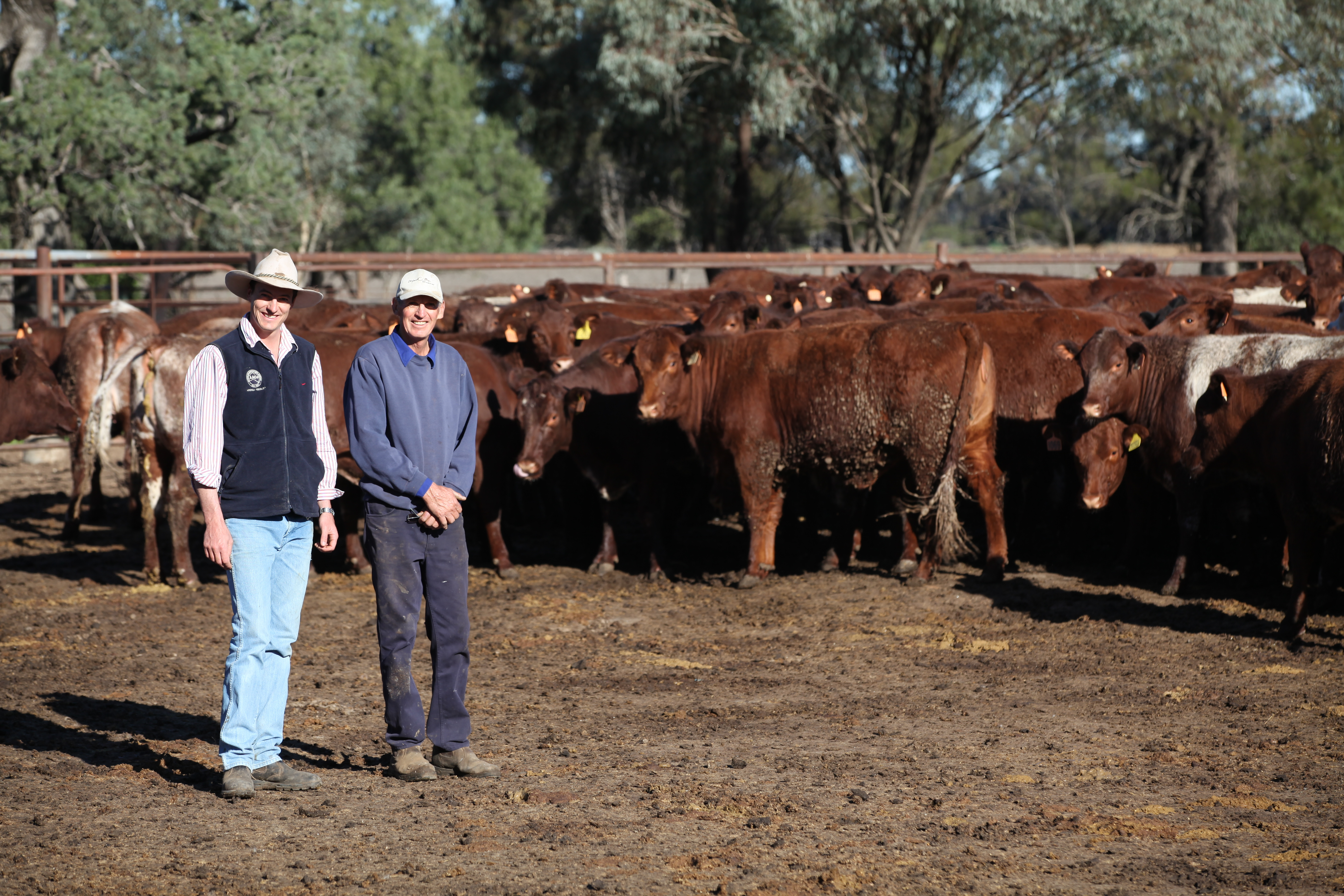 Mike & Ian with Weebollabolla cattle 2