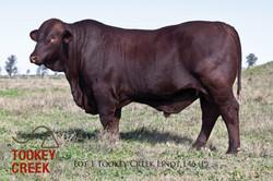 Lot 1 2017 Sale Bulls_010Lot 1 TC L46 copy