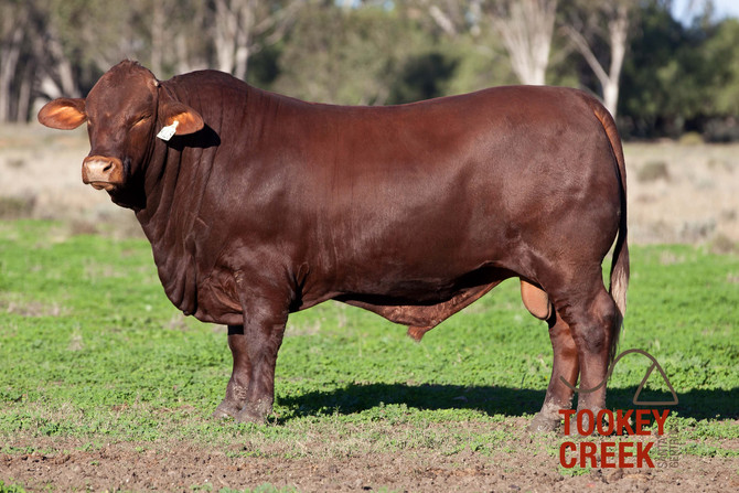 New Photos of Sale Bulls
