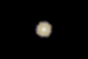 ETOILE SCINTILLANTE GOLD.png