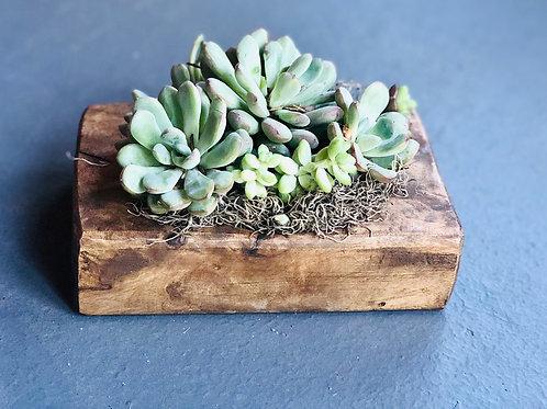 Block planters